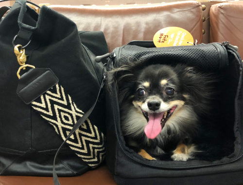 Travel with a small dog - doorsixteen.com